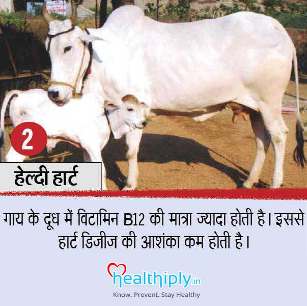 cow_products_health_benef1